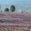Les champs d'arganiers et le grand désert du sud