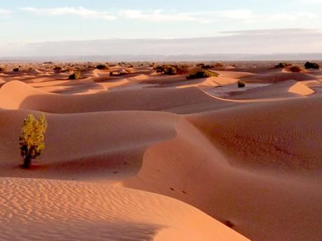 Escapade dans le grand désert du sud